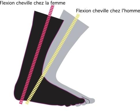 thoren-theory-flexion
