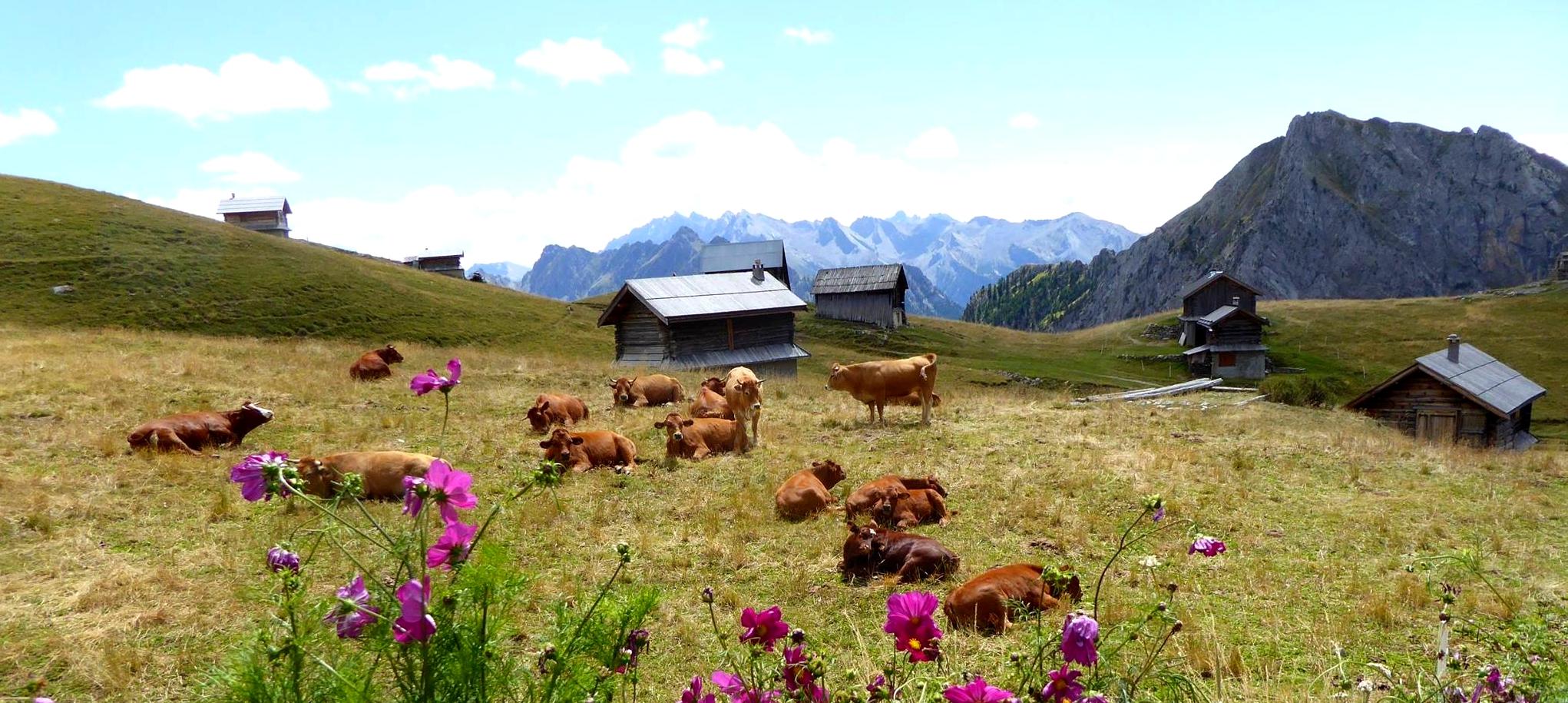 femmes-montagne-ete-detente-randonnee-bien_etre-decouverte-hautes-alpes-faune-flore-alpage-prairies-chalets